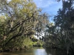 boating down the bayou